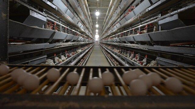 Tüketicinin talebi kahverengi yumurtanın fiyatını uçurdu.