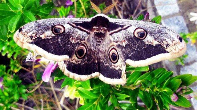 Bodrum'da görüldü: Dünyadaki en güzel türlerinden biri