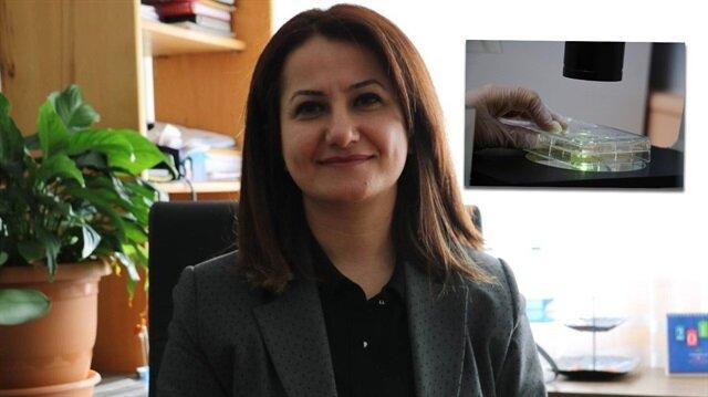 Doç. Dr. Elif Apohan, kanser hücrelerinin bölünmesini durduran ve kanser hücrelerini öldüren 3 yeni bileşik buldu.