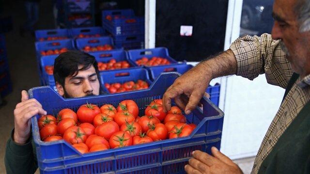 شيمشك: نتوقع نموا اقتصاديا بنسبة 5-6% بعد الاستفتاء