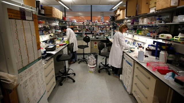 US scientists grow 'minibrains' in lab