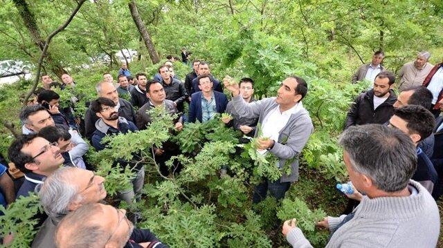  Balıkesir Orman Bölge Müdürlüğünde 2017 yılında 35 adet İşletme şefliğinin amenajman planları yenileme çalışmaları nedeniyle Türkiye de bulunan meşe türlerinin tespiti ile ilgili uygulamalı seminer yapıldı.