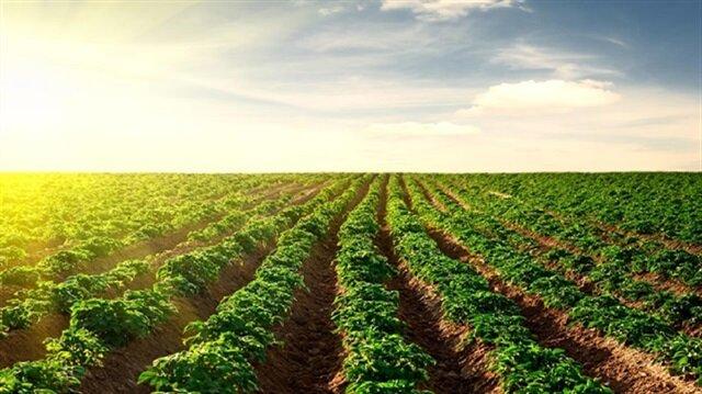 استثمارات بالملايين بين تركيا والسودان في القطاع الزراعي