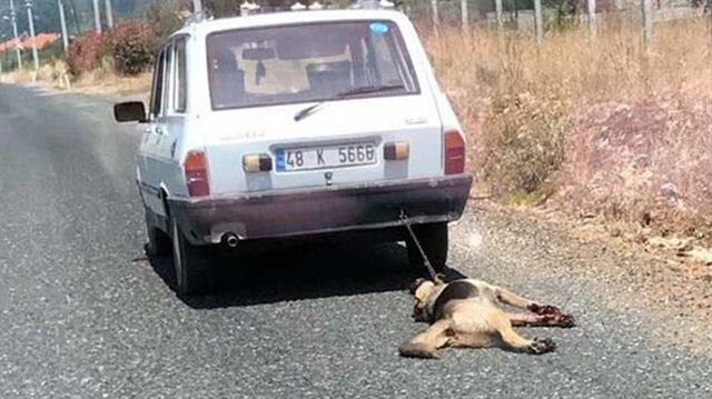 Köpeği arabasının arkasında sürükleyen adam serbest bırakıldı