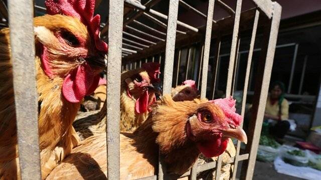 Namibia bans poultry imports from South Africa, Belgium after bird flu outbreaks
