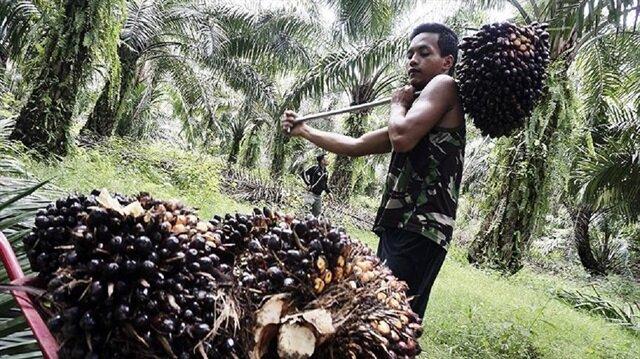 Tüketici palm yağı raporunu bekliyor.