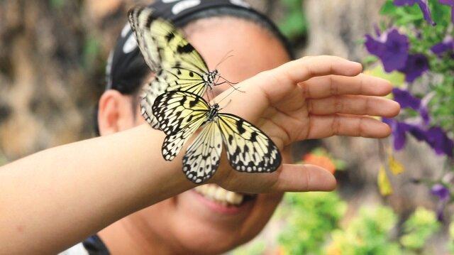 Binlerce kelebek Anadolu'ya  göçtü