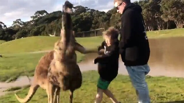 Kanguru çocuğu böyle yumrukladı