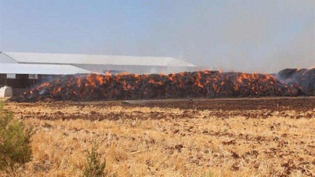 Kahta'da 225 ton saman kül oldu