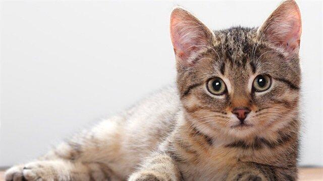 Kedi videoları kazandırdı.