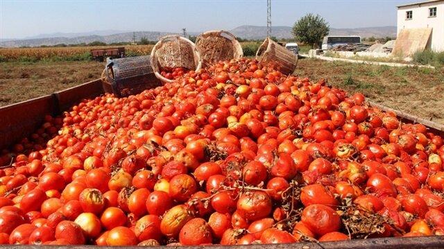 Salçalık domates üreticileri Rusya pazarının açılması halinde en azından önümüzdeki seneye daha umutlu bakabileceklerini söyledi.