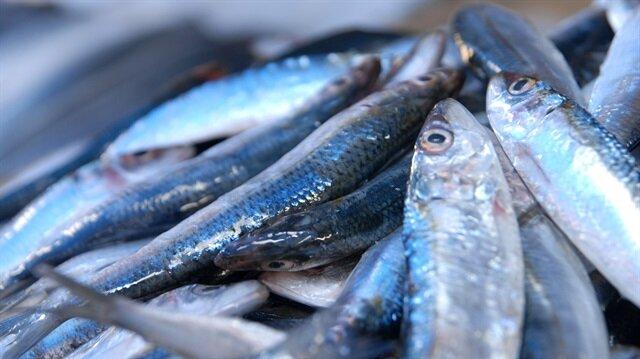 Giresun'da balıkçı tezgah ve manavlarında hamsinin kilogramı 15 liradan satılıyor.