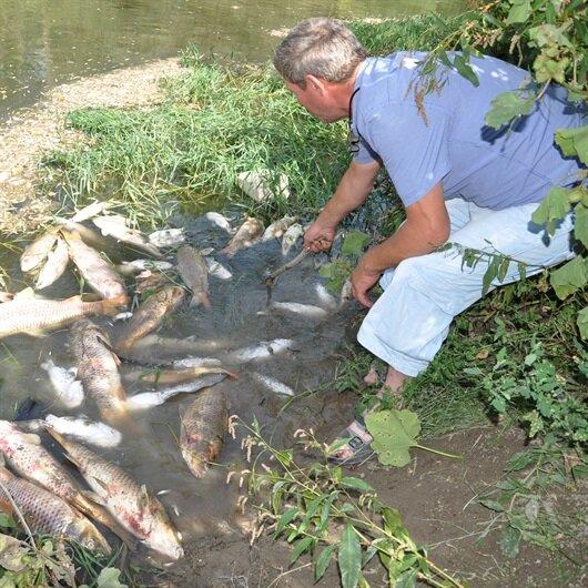 Bursa'da yüzlerce balık yine kıyıya vurdu
