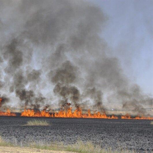 Ankara'da yangın: Mogan Gölü'nde sazlık alanlar yandı
