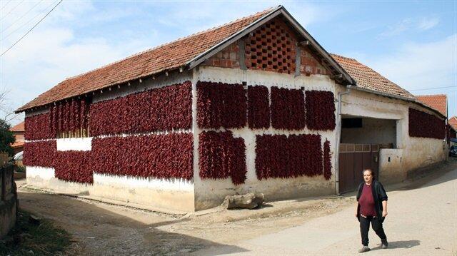 Lokosnica Köyü her yıl adeta kırmızıya boyuyor.