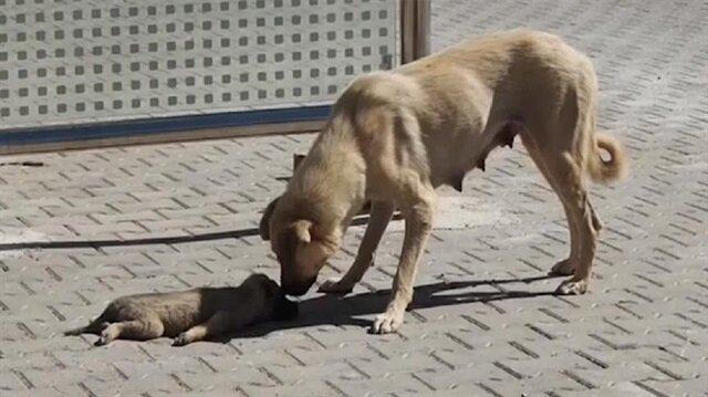 Araba çarpan yavru köpek hayatını kaybetti.