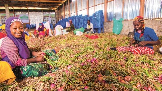 Türkiye ile Somali arasında tarımda iş birliği anlaşması imzalandı.