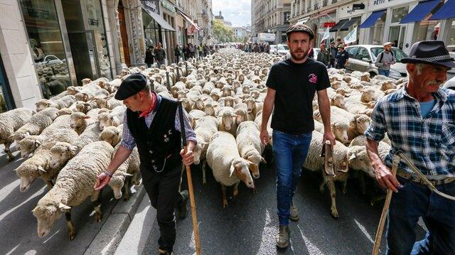 Avrupa'da soyu tükenme riskiyle karşı karşıya olan kurtları korumak için Fransız yönetimi yeni bir düzenlemeye gitme konusunda karar almıştı.