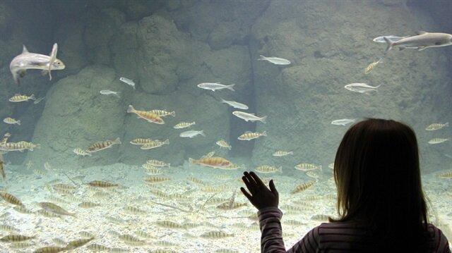 """افتتاح أكبر حوض أسماك أوروبي في """"لوزان"""" السويسرية"""