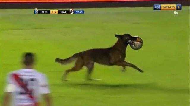 Sahaya giren polis köpeği topu alıp böyle kaçtı!