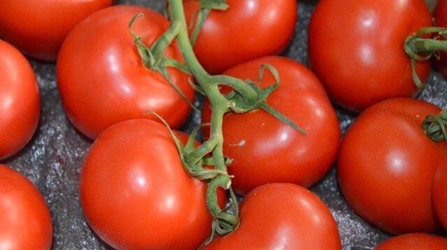 İlk domatesler Bergama'dan çıktı.