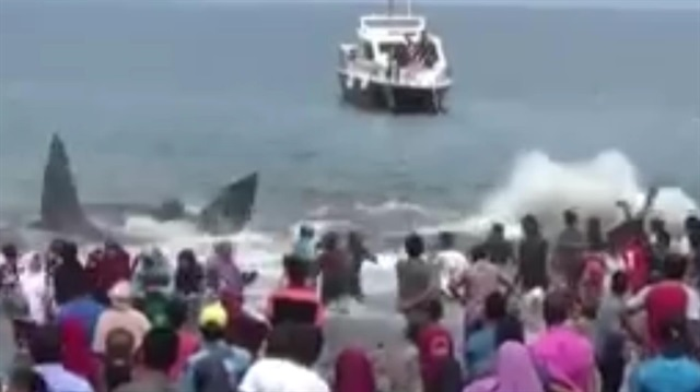Karaya vuran balinalar için seferber oldular