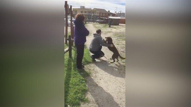 3 yıl sonra sahibiyle buluşan köpek