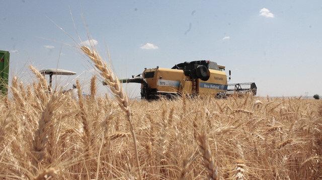 Diyarbakır'da yılın ilk buğday hasadı yapıldı