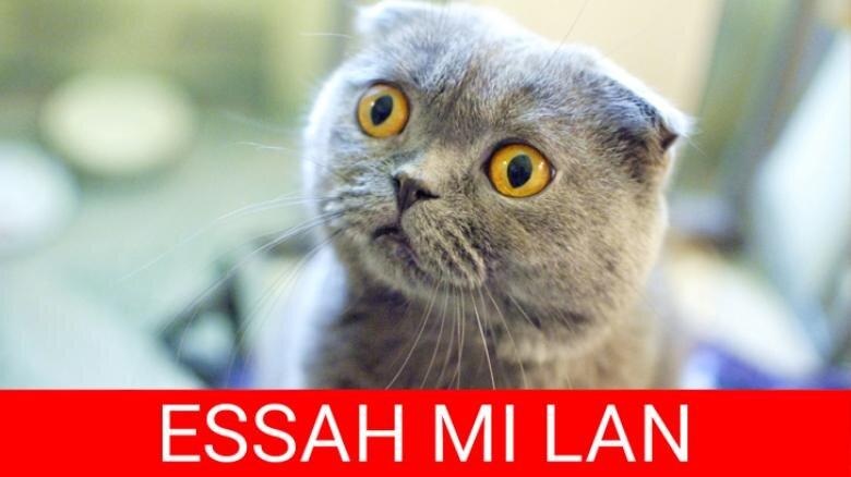 2016 yılına damga vurmuş en komik hayvan capsleri