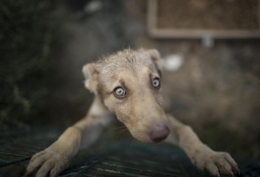 Animal shelter for stray dogs