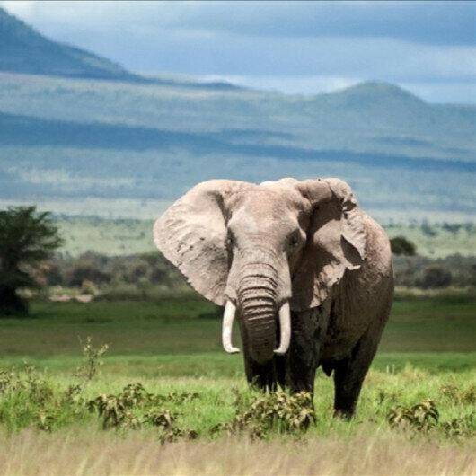 Kenya launches elephant naming ceremony to promote conservation