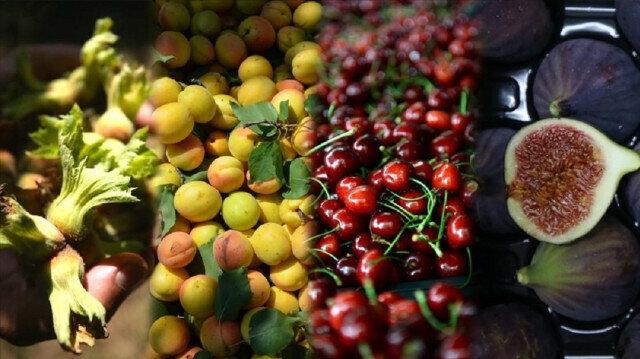 Turkey world's largest hazelnut, cherry, fig, apricot, quince, poppy producer