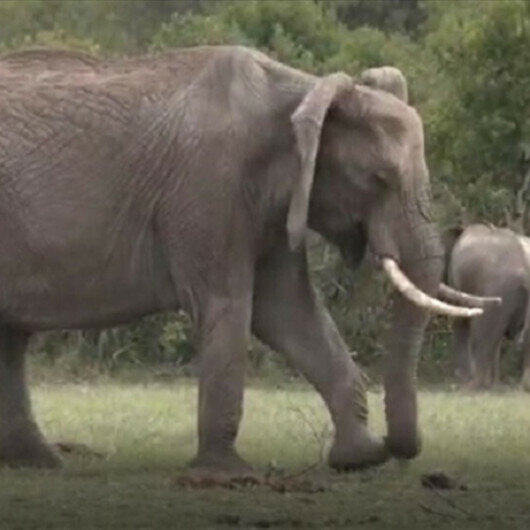 Two years, 2 iconic animals dead in Kenya
