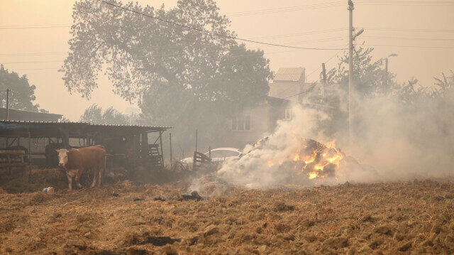 Massive forest fire in Turkey's Manavgat district