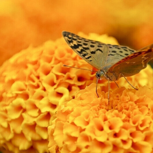Zanzibar butterflies protect forests, boost incomes