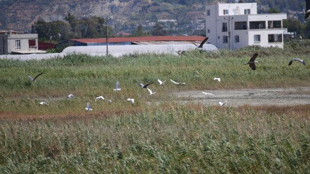 3 new bird species found in southern Turkey