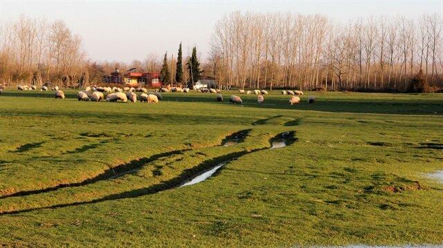 Köy sütü içerken golf oynayacaklar