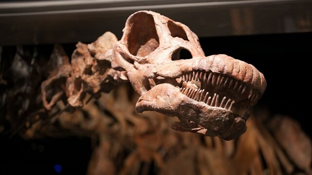 En büyük dinozor: Titanozor