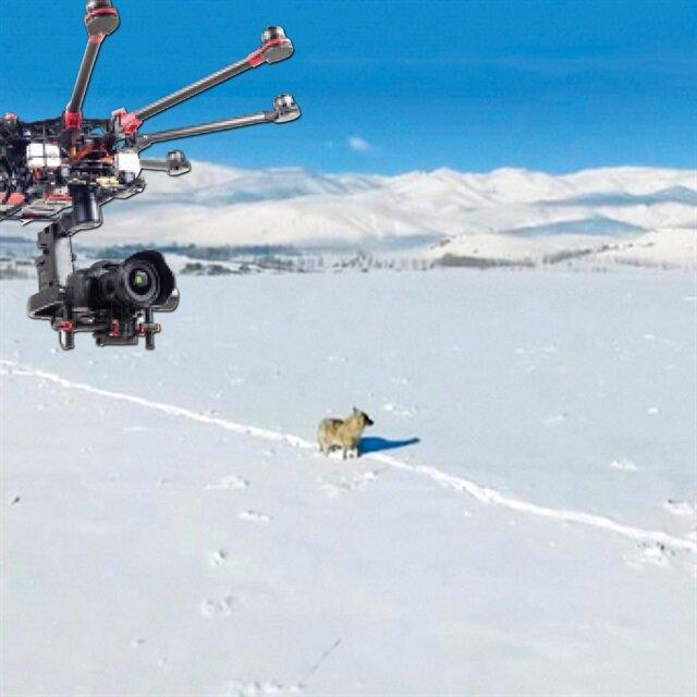 Drone'la kurt takibi