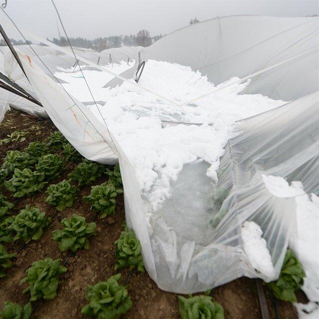 Kar yağışı nedeniyle 300'den fazla sera çöktü