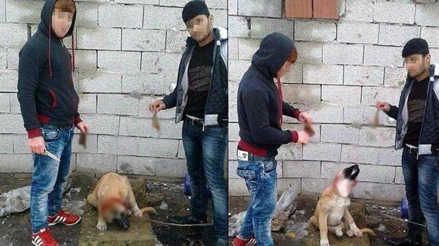 Yavru köpeğe işkence edip sosyal medyada paylaştılar