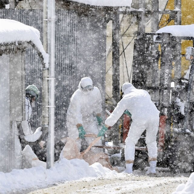 China bans live poultry trade amid bird flu outbreak