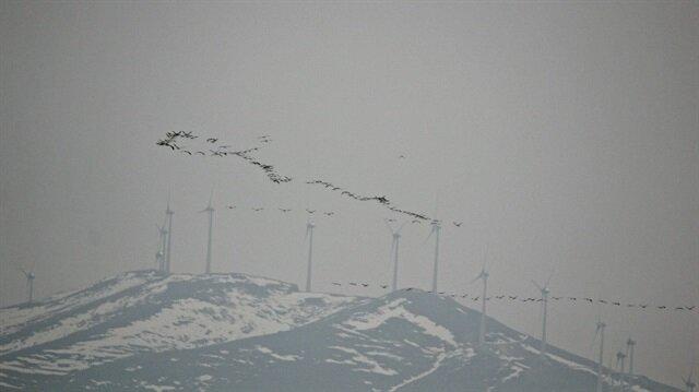 Ülkemizde 'allı turna' olarak bilinen flamingolar Seyfe Gölü'nde.