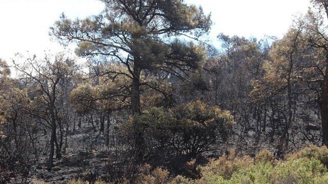 Amasya'da orman yangını haberi