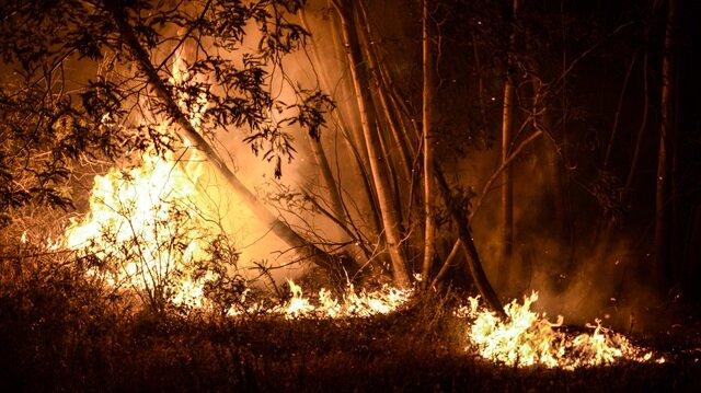 Portekiz'deki orman yangınında 63 ölü, 135 yaralı