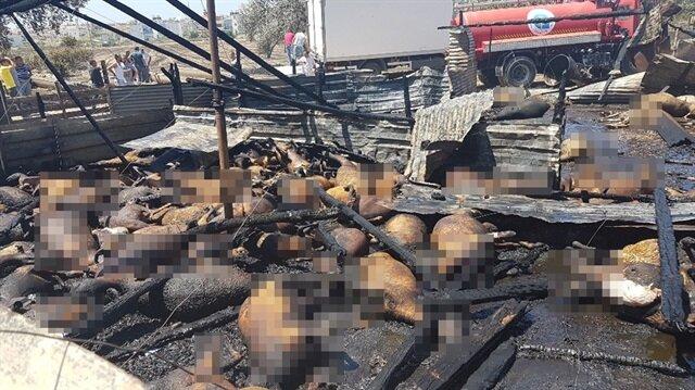 Manavgat'ta çıkan yangında 550'ye yakın hayvan telef oldu
