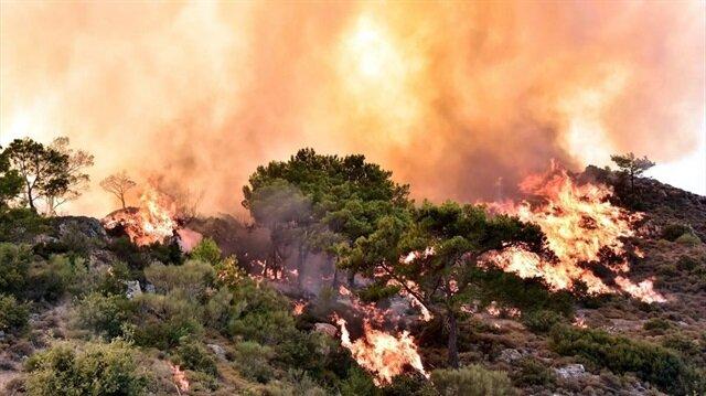 Muğla'daki orman yangınında 50 dönüm alan zarar gördü