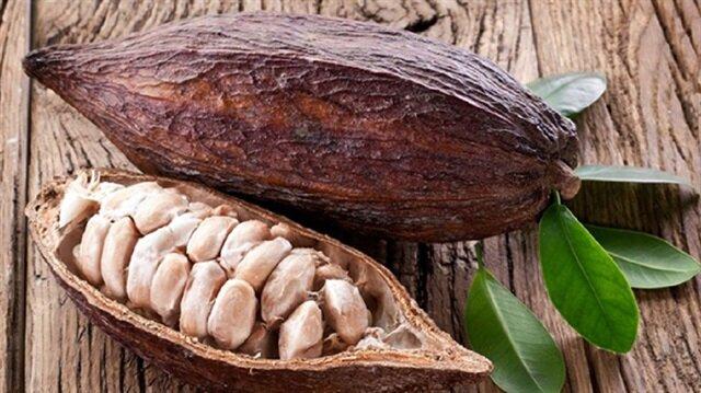 Yaz mevsiminde bronzluk için kullanılan ve içerisinde bol miktarda E vitamini bulunduran kakao yağı, aslında her mevsim önemli bir cilt bakım desteği olarak ta kullanılabilinir.