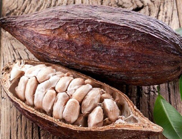 Kakao yağı hakkında bilinmeyenler