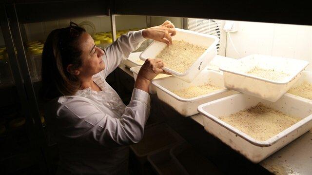 """""""الحشرات المفيدة"""" تغطي نفقات مختبر بتركيا"""